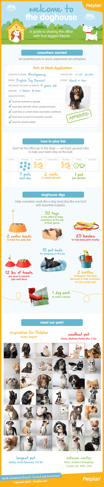 Taking pet to work infographic