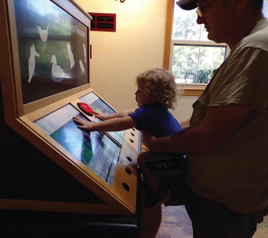 Toddler learning about birds