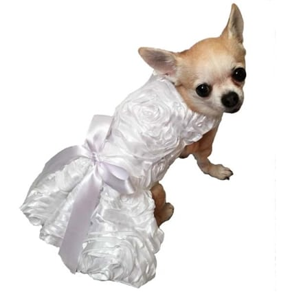 chihuahua in wedding dress