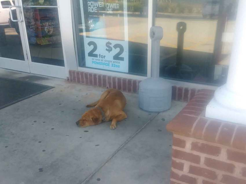 dog outside store