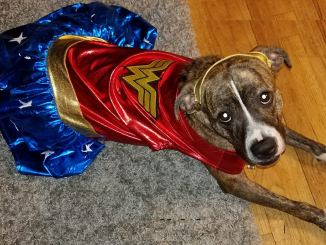 Dog in Wonder Woman costume