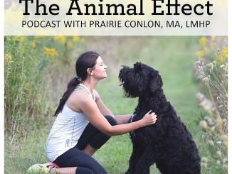 Animal Effect podcast ad