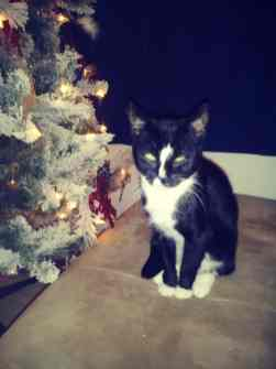Poussey's first Christmas.