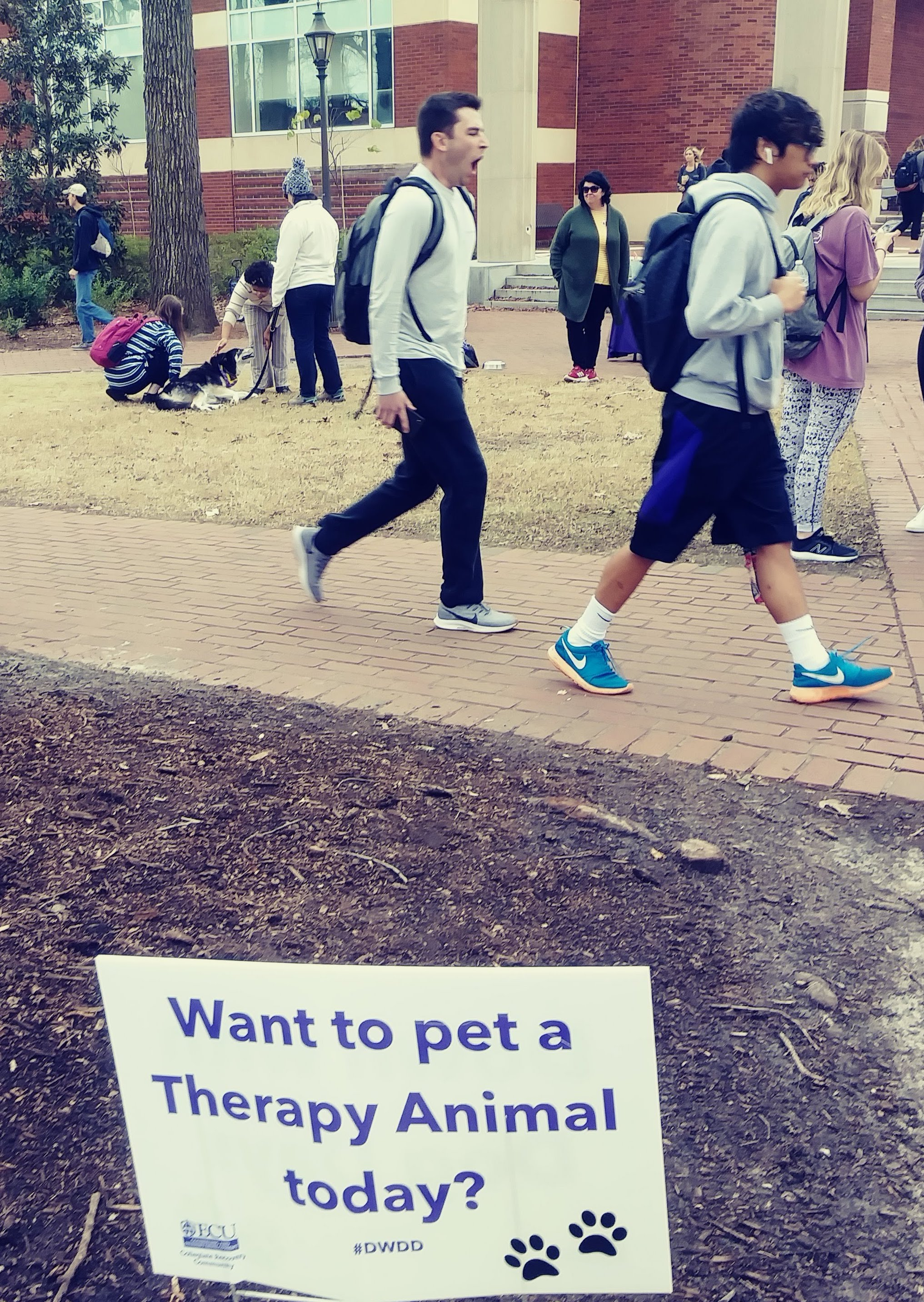 student petting therapy dog on campus