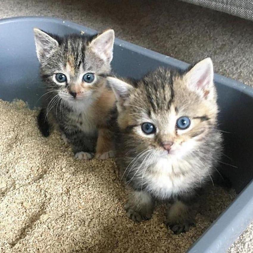 two kittens in litterbox