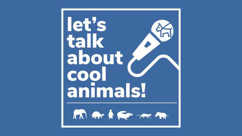 Let's Talk About Cool Animals logo