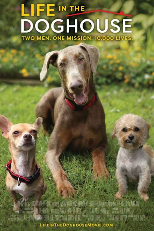 """""""Life in the Dog House"""" movie poster"""