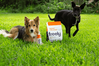 Dogs with Freely dog food