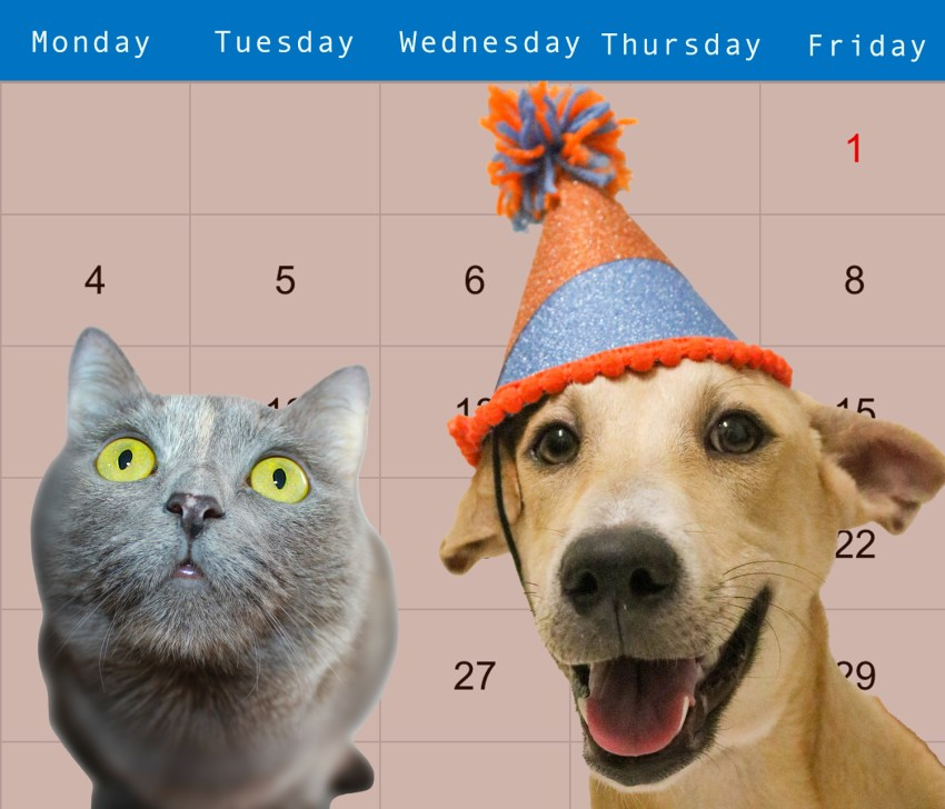 cat and dog on calendar