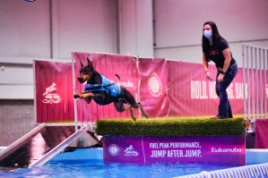 Dog leaping into water