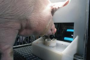 pig moving joystick