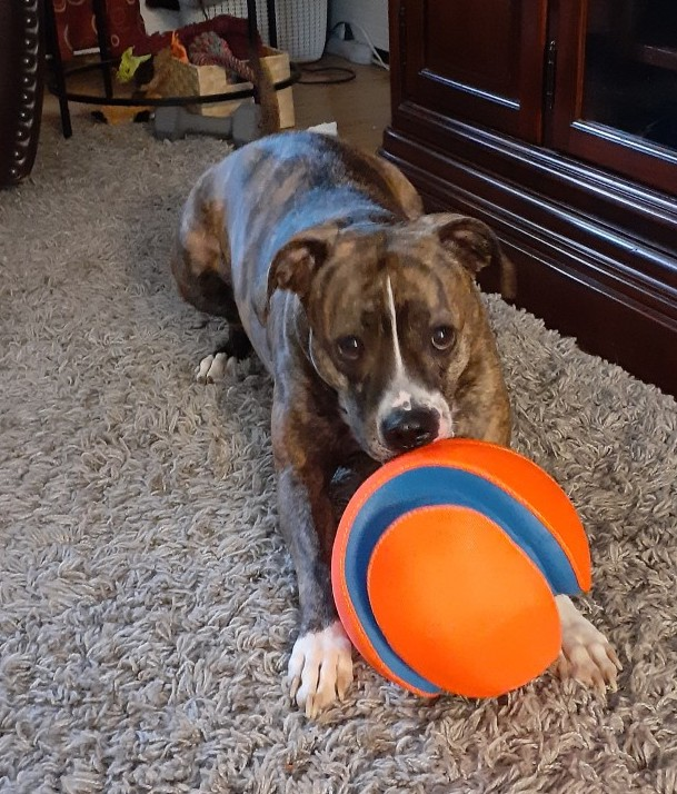 Meadow with new ball