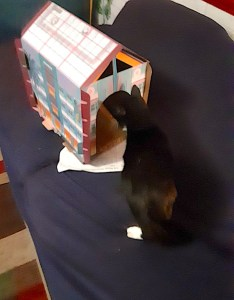 Poussey can cat hotel
