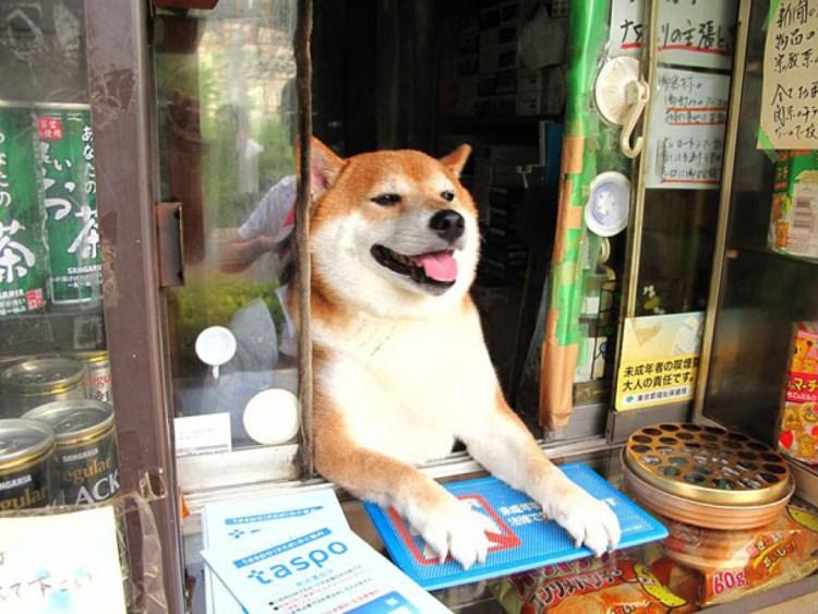 shiba shop assistant japan