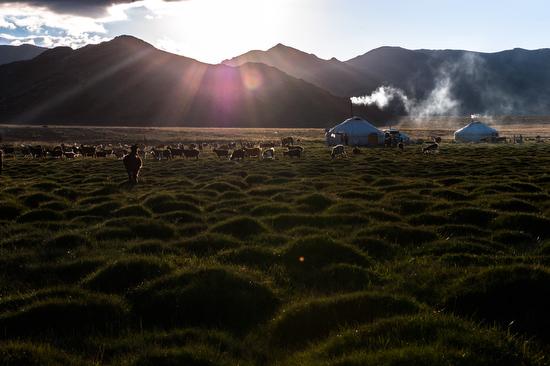 Un'accampamento di nomadi falconieri in Mongolia