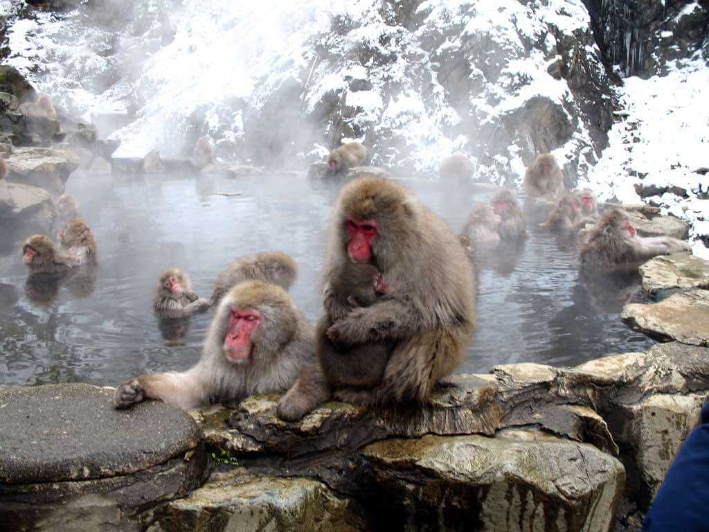Jigokudani Monkey Park, Japan - by Douglas Sprott - dugspr - Home for Good:Flickr