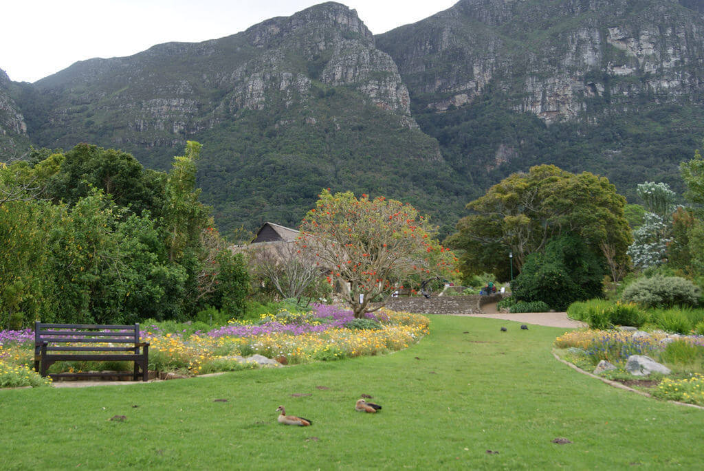 Kirstenbosch Botanical Gardens, Cape Town - by Brent Newhall:Flickr