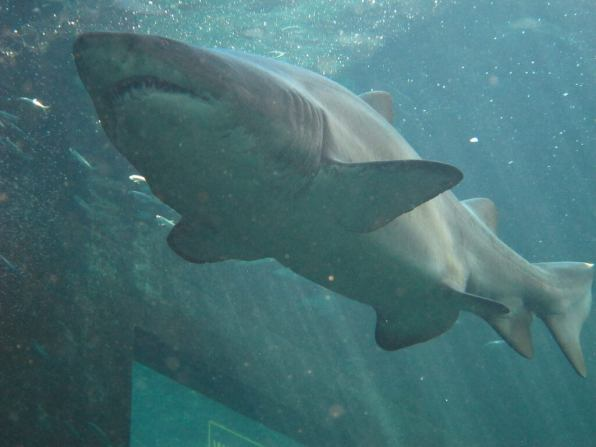 Shark Diving, Cape Town - by Amy Truter:Flickr