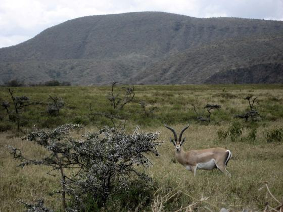 Hell's Gate National Park, Kenya - by Kaspar - iamkaspar:Flickr