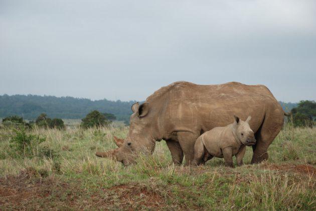 Nairobi National Park, Kenya - by imaginextra:Flickr