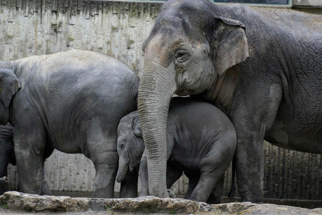 Zurich zoological Garden - by alex.ch:Flickr