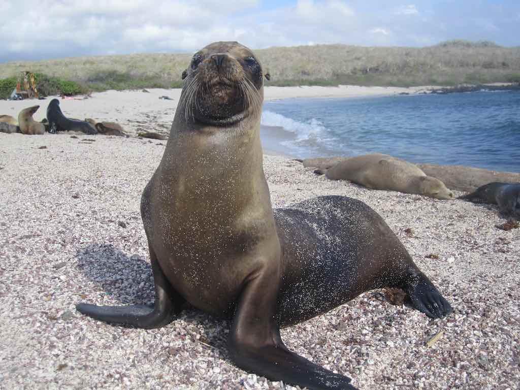 La Loberia, Galapagos - by Chris Piel - Chris Piel Photography:Flickr