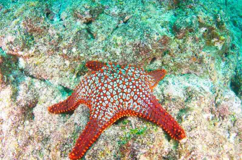 Snorkeling, Galapagos - by Tom Gruber:Flickr
