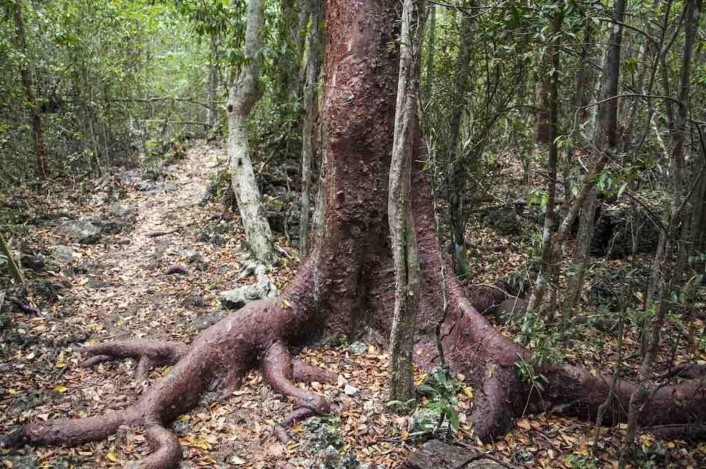 Mastic Trail, Cayman Islands - by Chris Bentley - cementley:Flickr