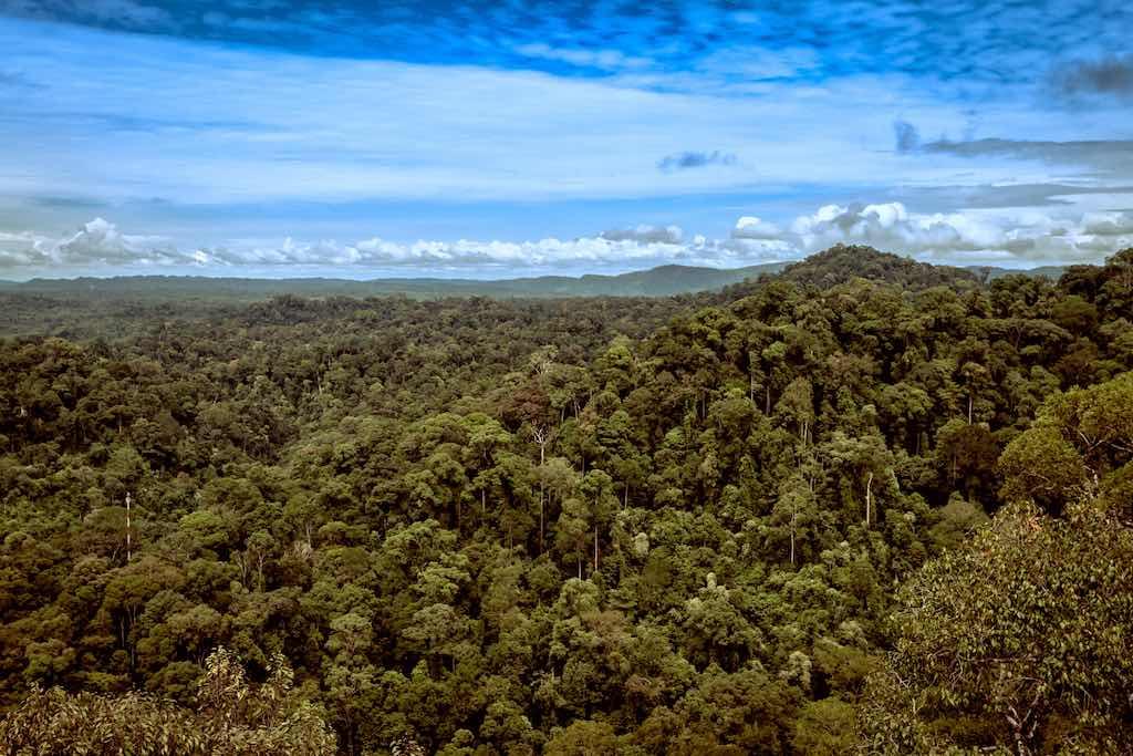 Ulu Temburong National Park - by Baron Reznik :Flickr