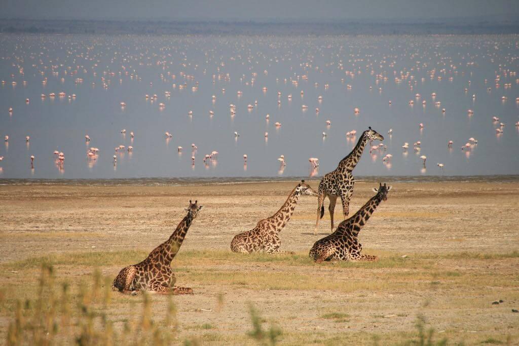 Lake Manyara National Park, Tanzania - by Marc Veraart /Flickr
