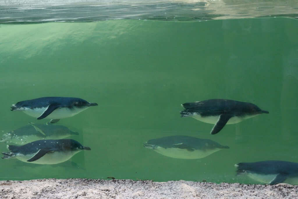 Perth Zoo - by Logan Campbell - colinlogan:Flickr