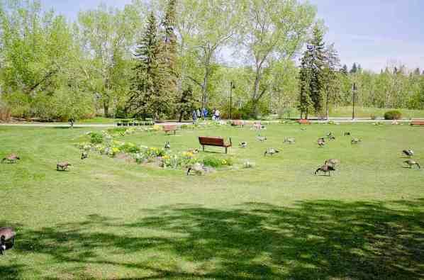 Prince's Island Park, Calgary -by necopunch/Flickr.com