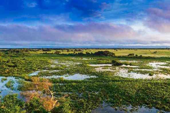 Pantanal, Mato Grosso Sul, -by Filipefrazao/Wikipedia.org