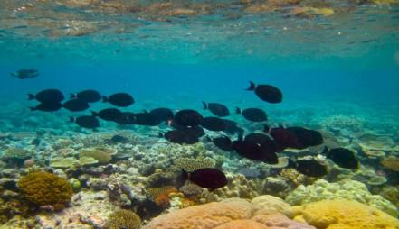 The Great Barrier Reef,Cairns, Queensland, By Kyle Taylor, flickr.com