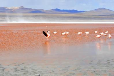 Lagoon Colorada -by evastupica/Pixabay.com
