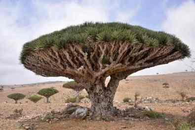 Socotra Island -by Rod Waddington/Flickr.com
