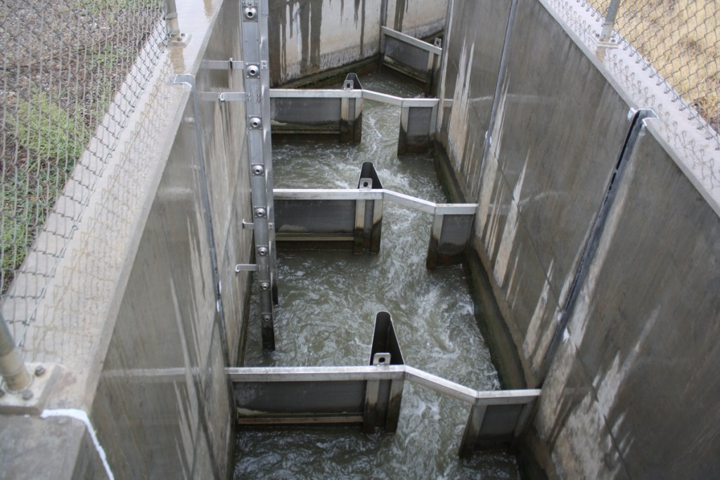 This fish ladder on the Redlands Diversion Dam helps fish travel up stream.