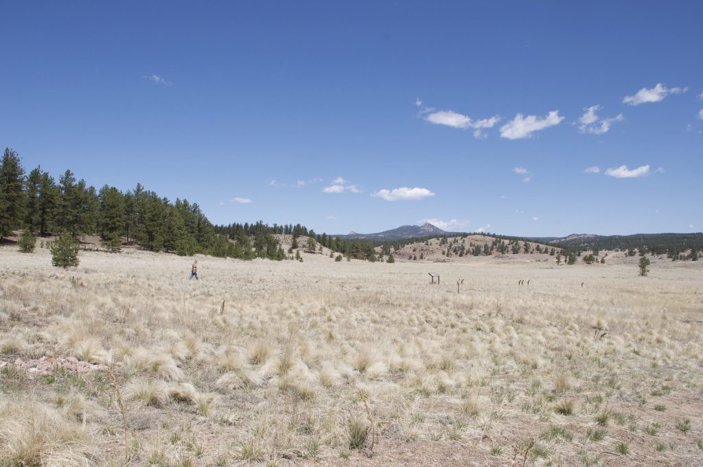 An open meadow edged with pine forest at Florissant Fossil Beds National Monument