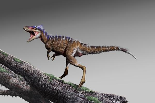 A reconstruction of North America's newest tyrannosaur, Moros intrepidus.