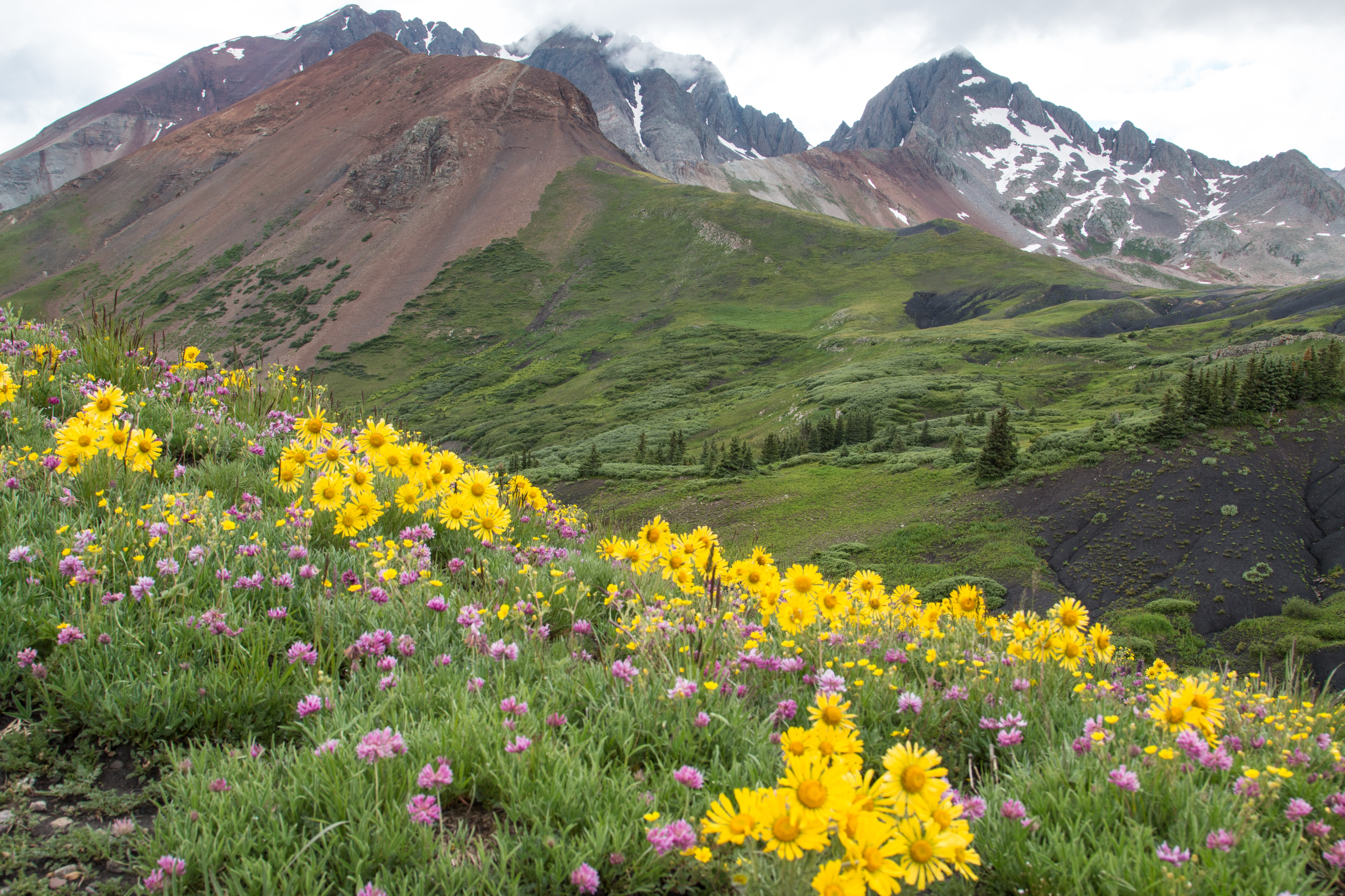 <p>Wildflowers on the trail to Cross Mountain, between Telluride and Rico. The 7.2-mile hike is strenuous, but rewards those who complete it with solitude and rare blooms.</p>