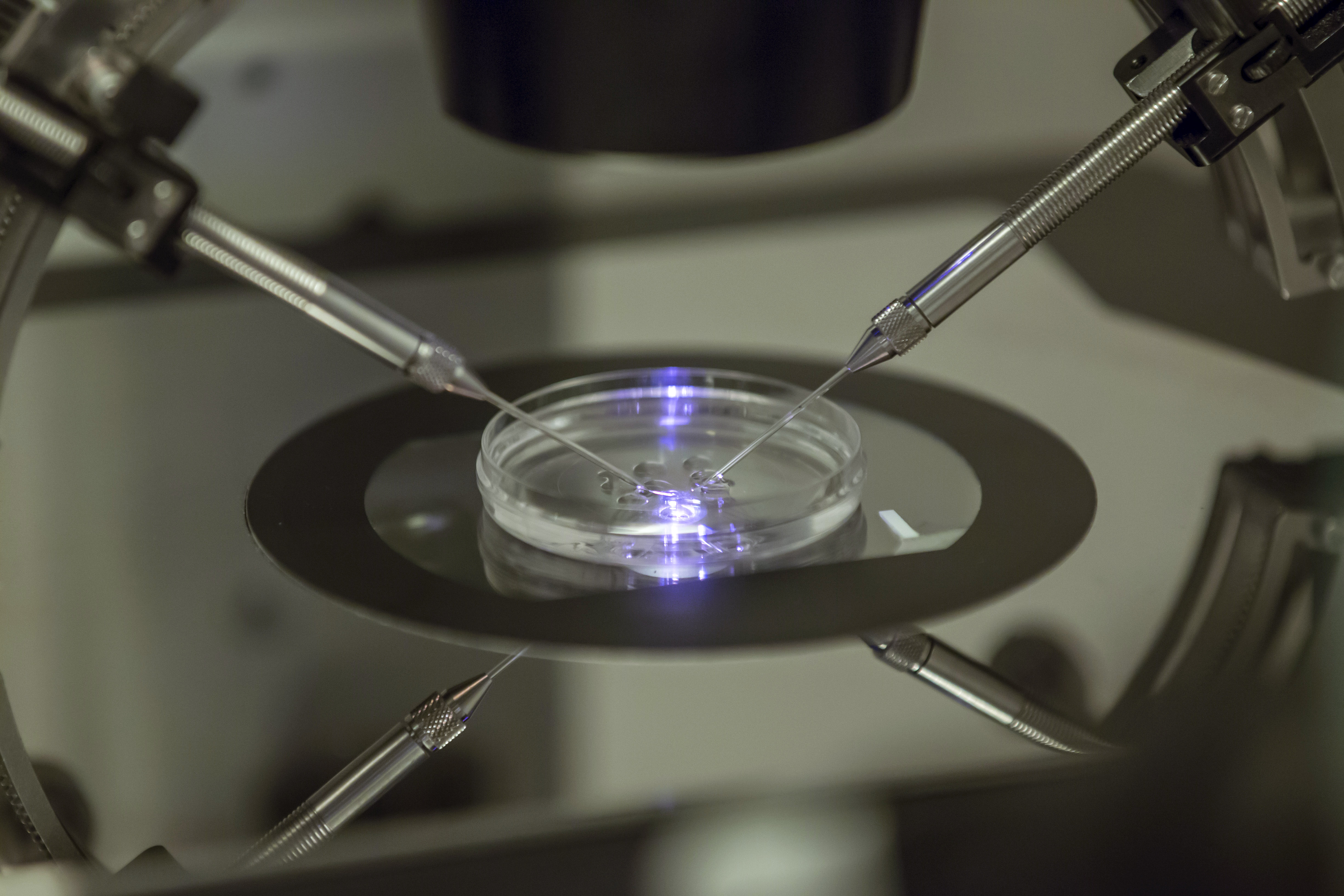 <p>An embryologist works on a petri dish at the Create Health fertility clinic in south London on Thursday, Aug. 14, 2013.</p>