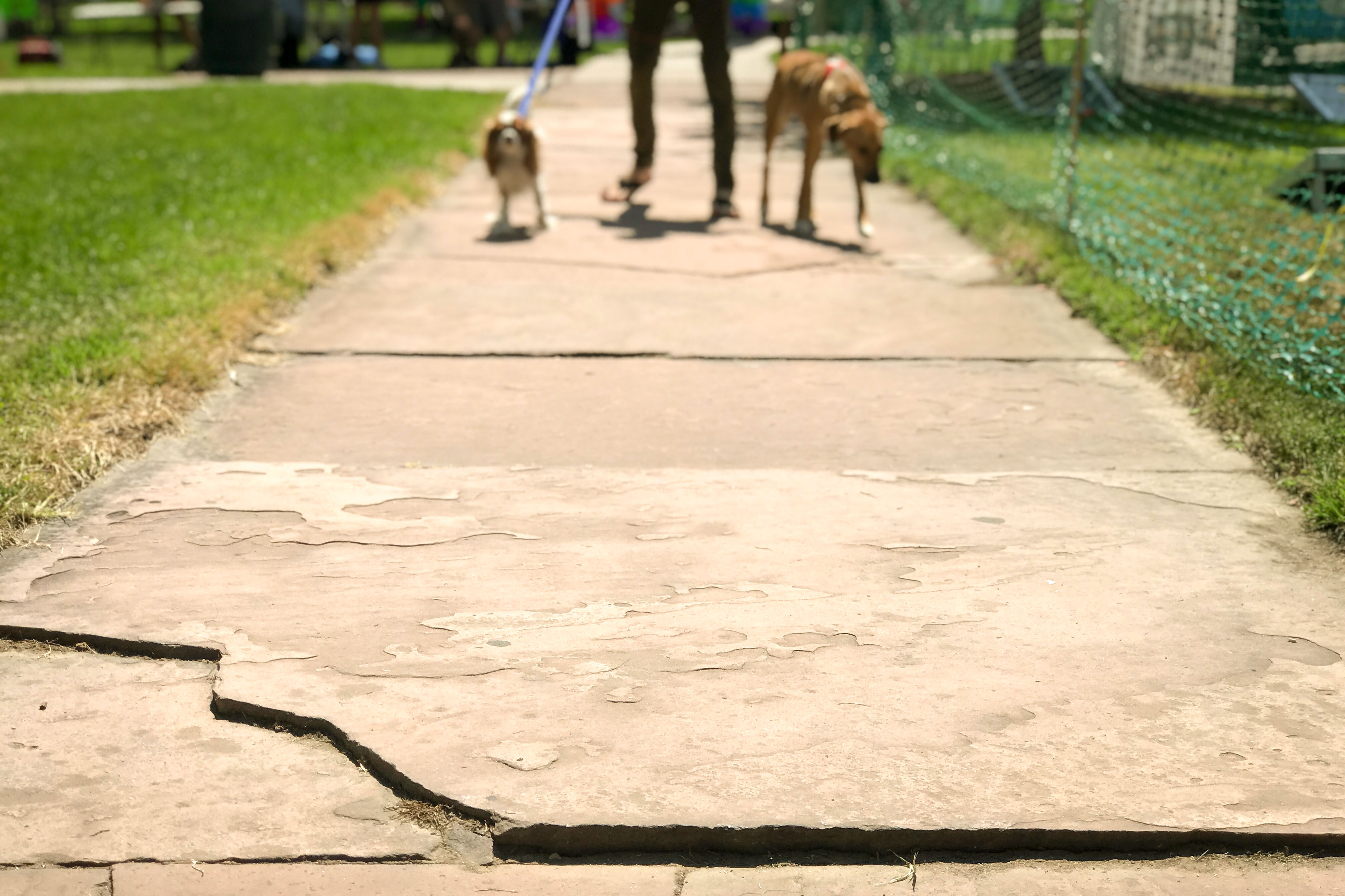<p>A man walks his dogs on a stretch of flagstone sidewalk in the Mestizo-Curtis Park neighborhood. </p>