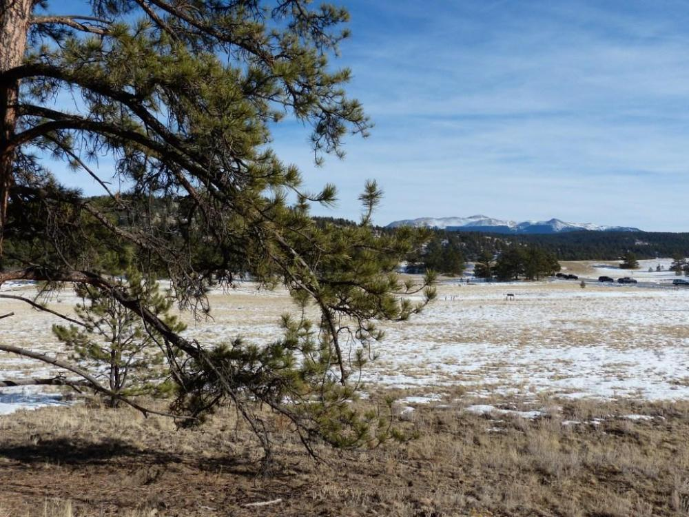 """<p>Author David George Haskell made an ultrasound recording of water drying up inside thisponderosa pine near Florissant, Colorado for his book """"The Songs of Trees."""" The book won the 2018 Bourroughs Medalfor distinguished natural history writing.</p>"""