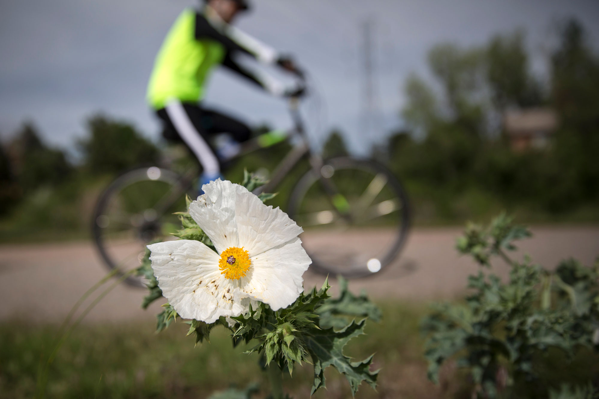 The High Line Canal, once an important irrigation system for Colorado's Front Range, is better known now as a recreation trail. A bicyclist rides the Highline Canal Trail near South Quebec Way on June 12, 2019.