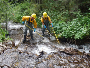 Cutthroat Trout Rescue During Hayden Wildfire