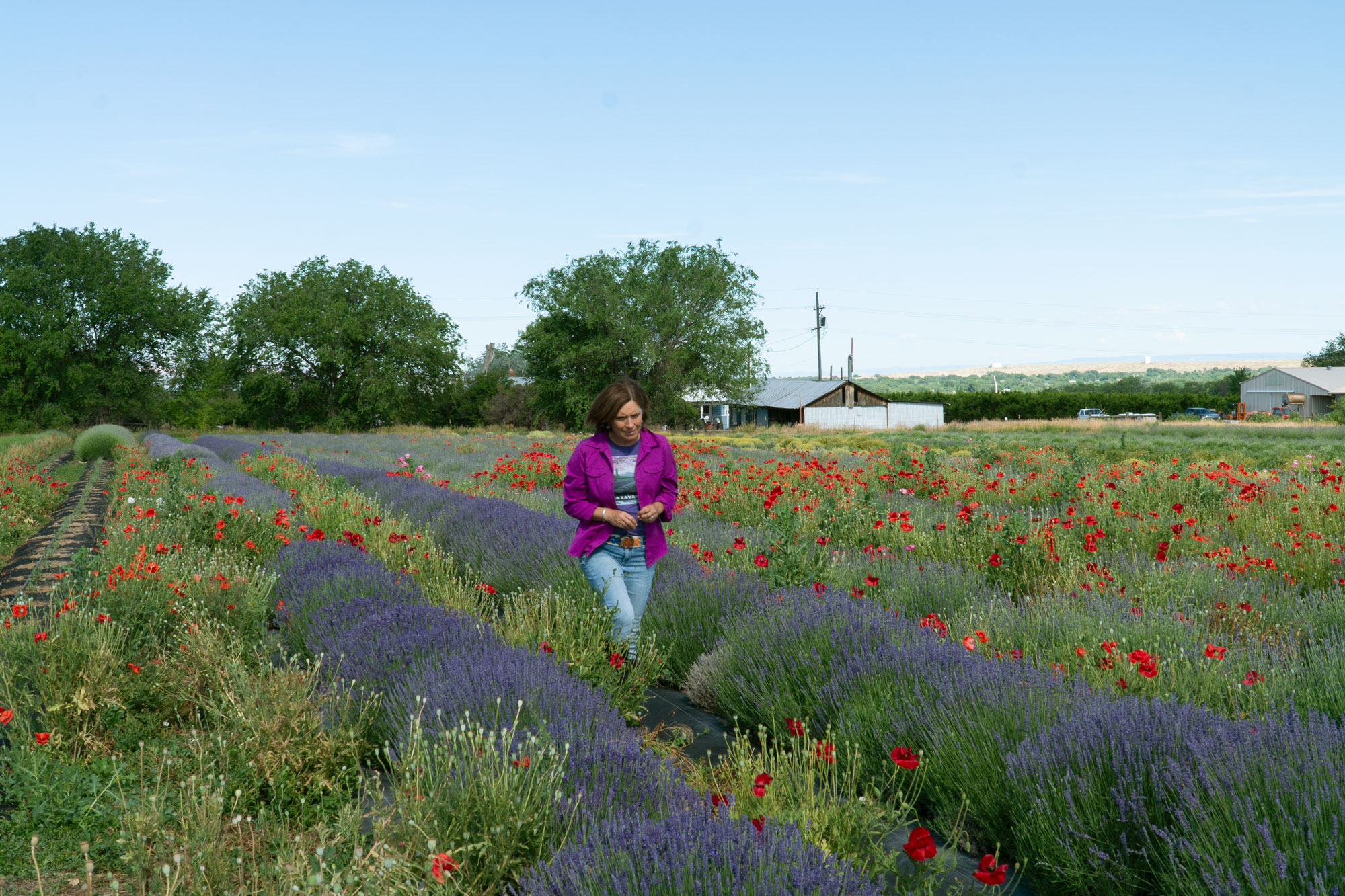 <p>Owner Paola Legarre walks through her lavender rows on her Palisade farm on June 19, 2019.</p>
