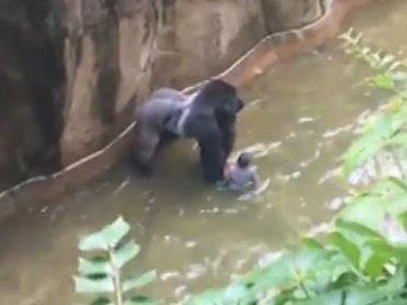 gorilla-screen-grab