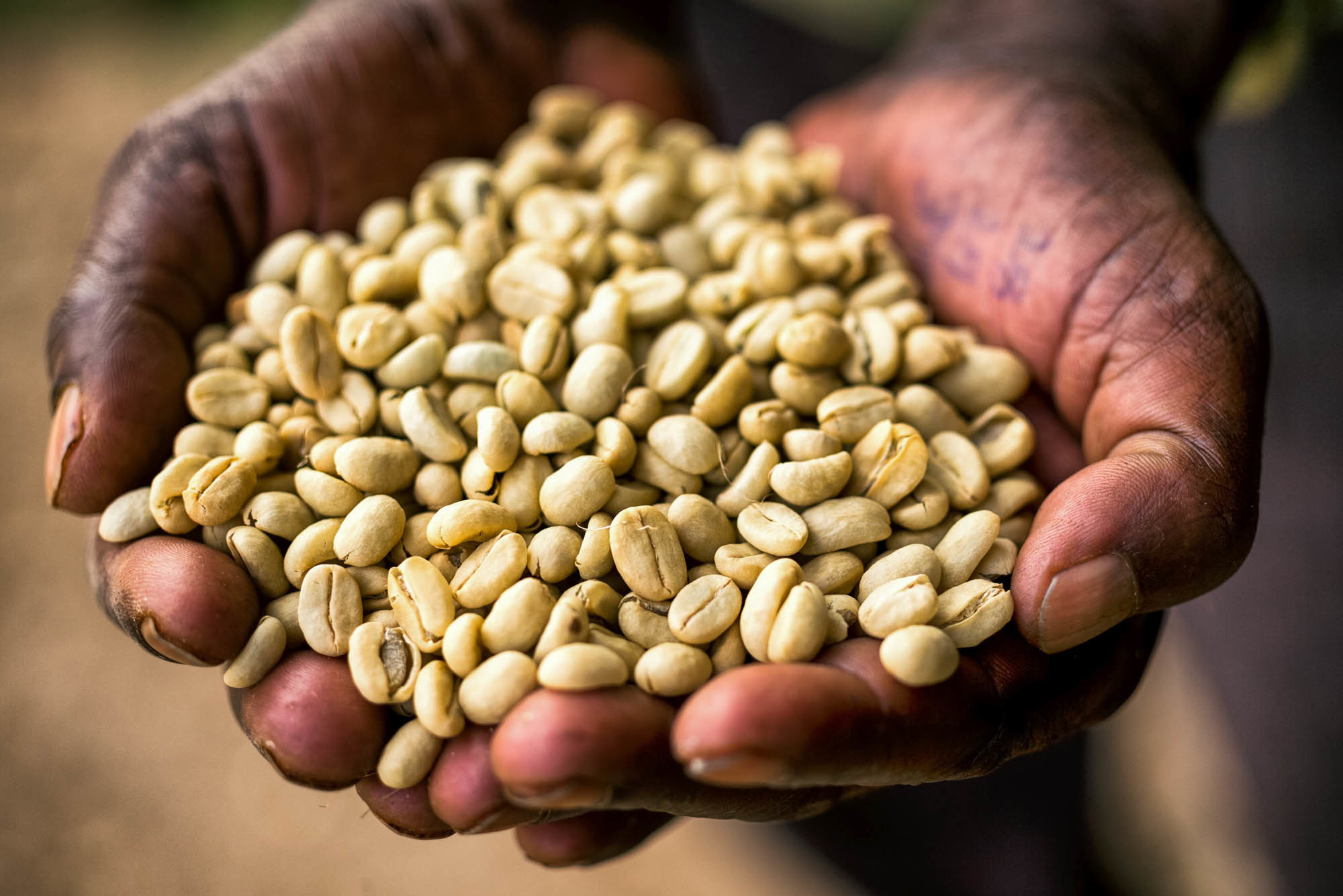 washed-coffee-south-west-ethiopia---credit---alan-schaller-and-union-hand-roasted-coffee