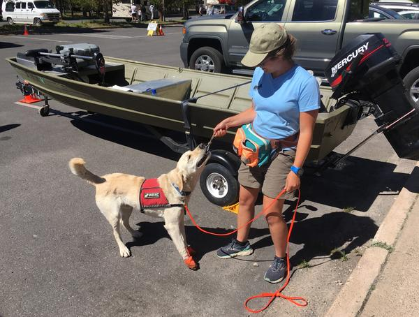 Kayla Fratt and working dog, Tobias, at Grant Village Visitor Center in Yellowstone National Park.