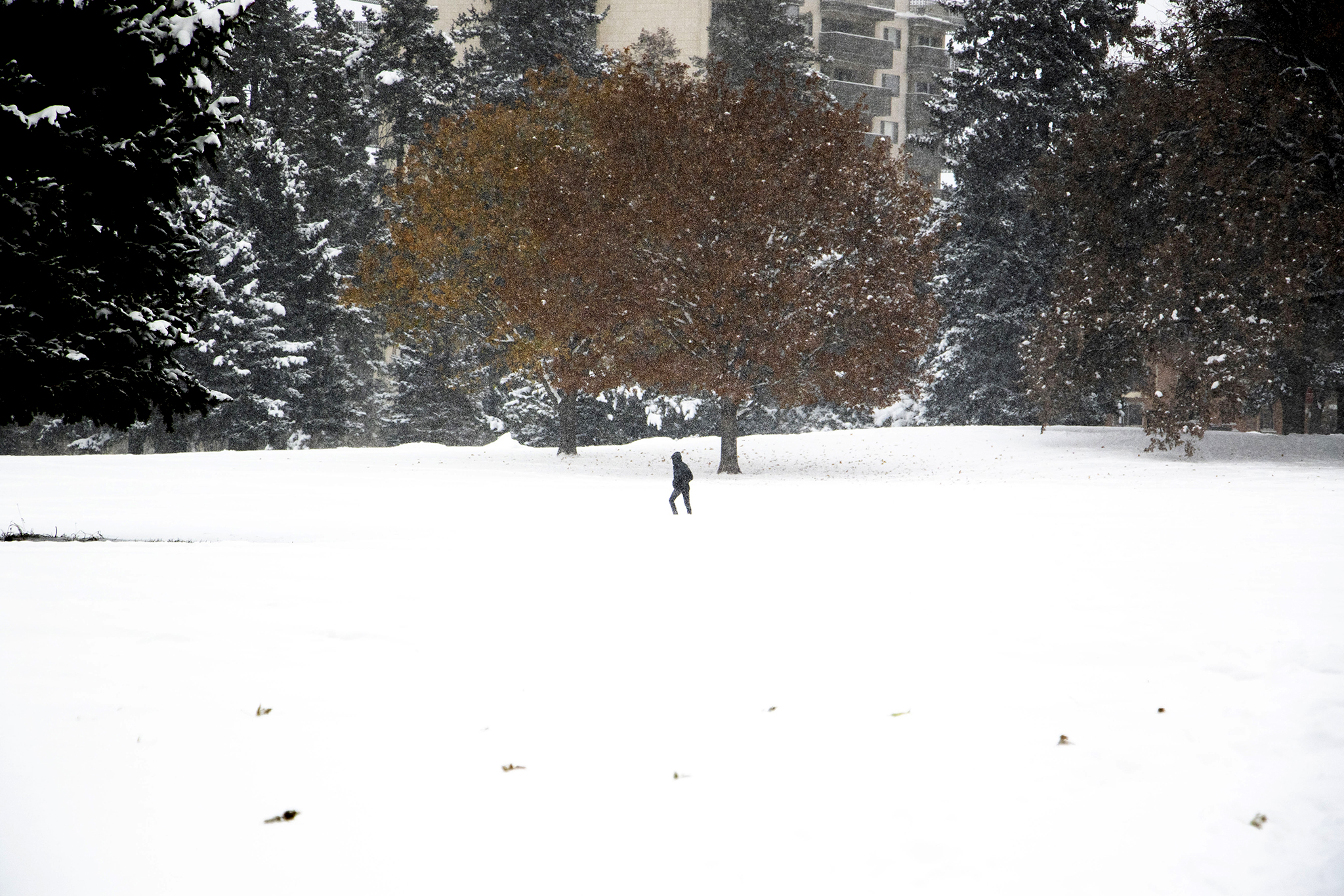 A lone figure crosses an expanse of snow in Cheesman Park. Oct. 29, 2019. (Kevin J. Beaty/Denverite)